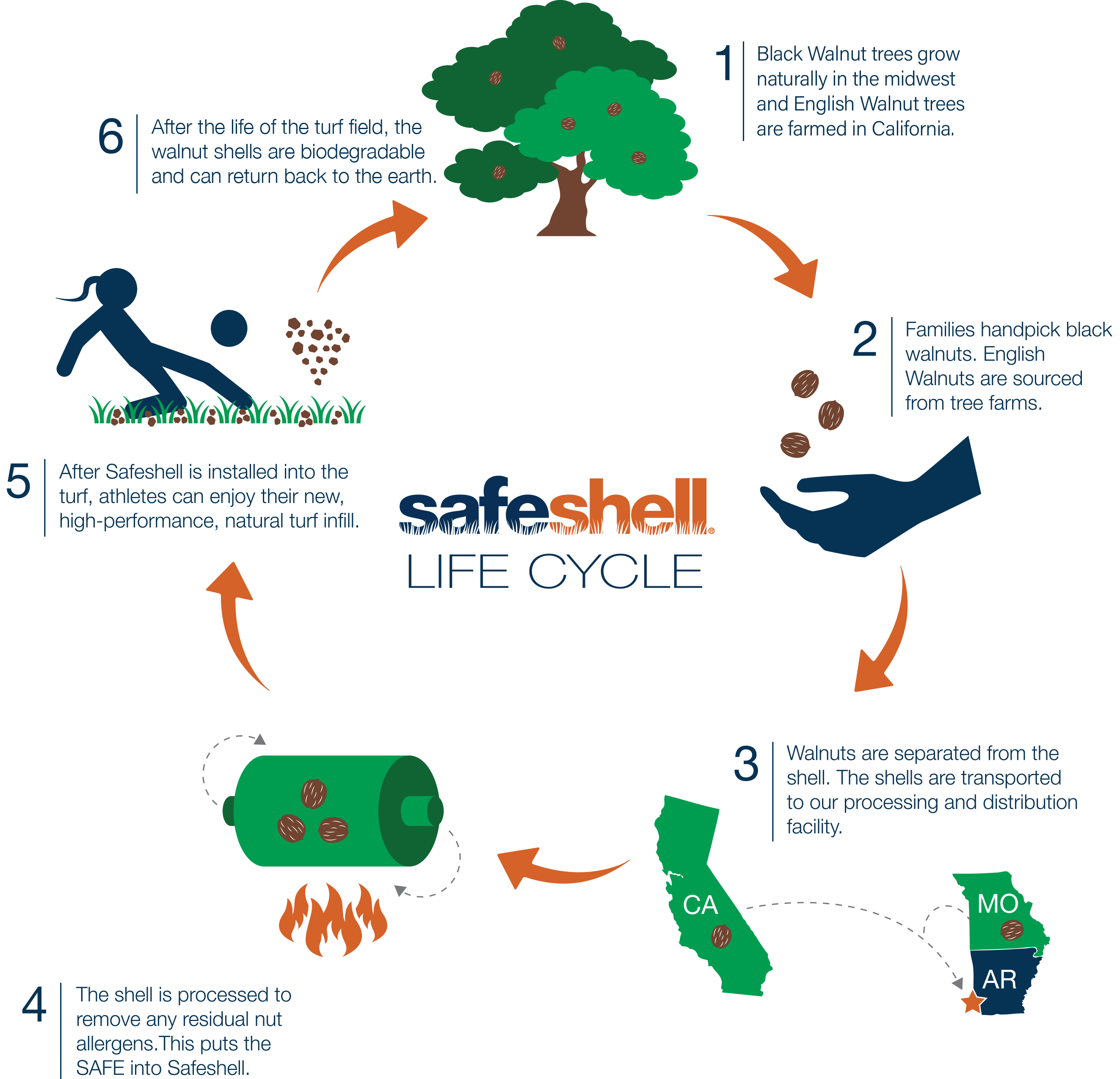 Safeshell infographic